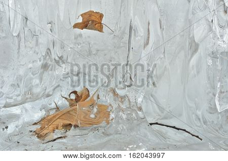 A close up of the dry yellow leaves in melting ice.