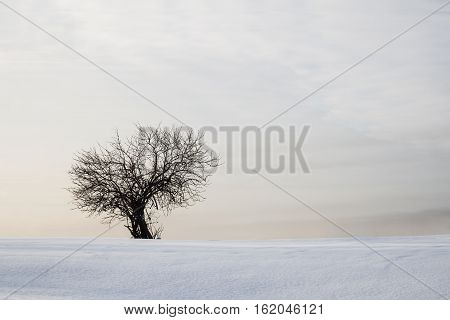 lonely tree on a snow-covered field .