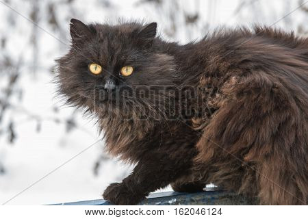 black shaggy stray cat with yellow eyes
