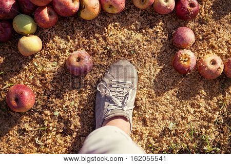 Farmer's boot on ground with Italian typical apples