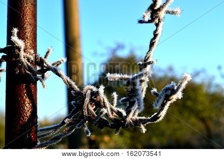 dangerous and barbed wire in silver frost glows in the sun and prevents passage
