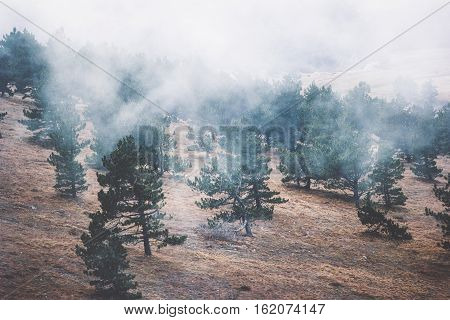 Foggy Coniferous Forest Landscape misty trees background Travel serene scenic aerial view
