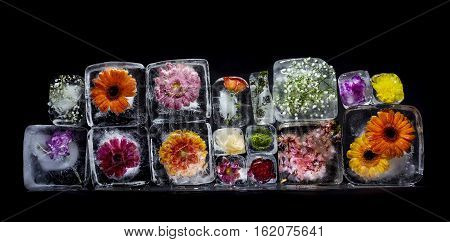 Group of flowers in ice cubes on a black background