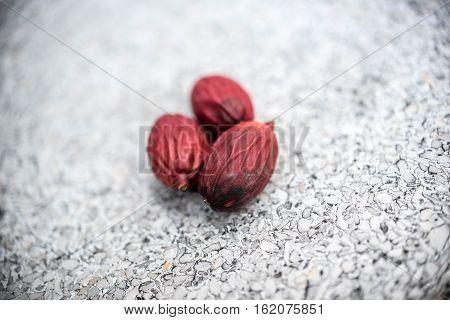 Fruit Of Lipstick Palm Or Sealing-wax Palm Or Raja Palm.