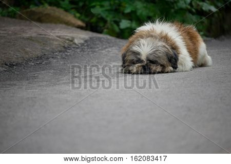 The lonely Dog lying on the floor