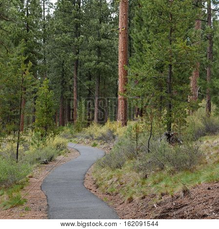 A forest path in LaPine State Park in Central Oregon leads to the largest ponderosa pine tree in Oregon and to the Deschutes River on a spring day.