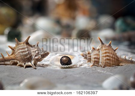 Seashells on the sand. Two shells similar to animals and small a kid