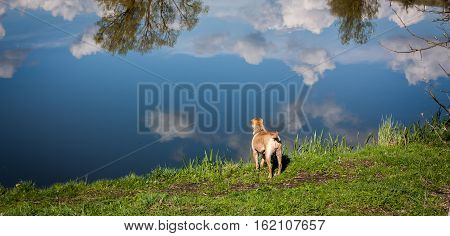 dog standing on the beach and looking at the water in which reflect on the cloud