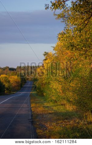asphalt road among yellow and green trees in the woods, warm colors
