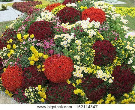 ландшафтный дизайн, букет цветов клумба из цветов