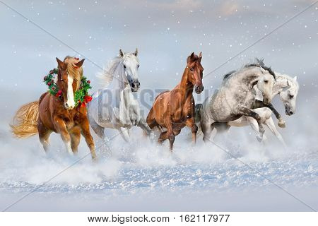 Horse herd run in snow. Christmas image