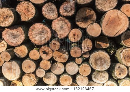 A close-up image of a stack of cut logs in Launde Woods, Leicestershire, England, UK