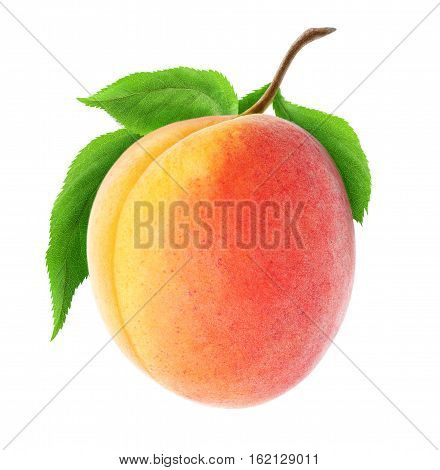 Isolated Apricot On A Branch