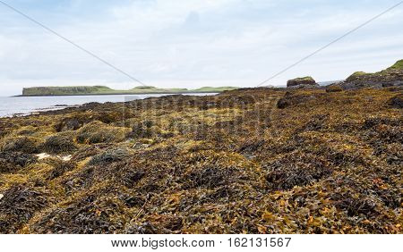 Coral Beach on the Isle of Skye in Scotland near Dunvegan