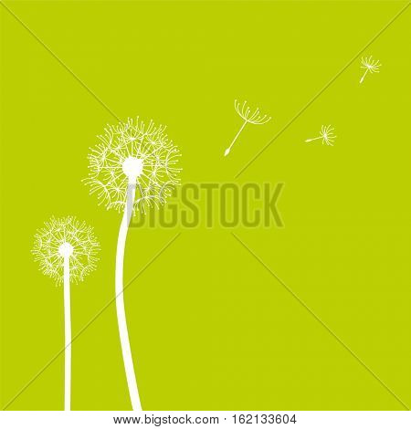 Blowing dandelion seeds in the wind spring background