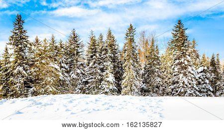 White winter in Moncton, New Brunswick, Canada