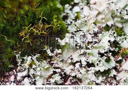 Moss and lichen in detail and close-up emphasizing the texture and color contrasts.
