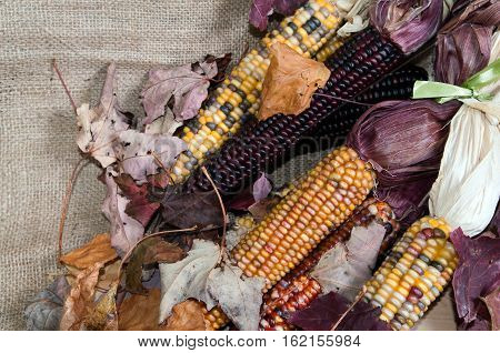 Maize or Indian corn on a brulap bag