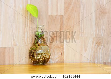 A bulb glass vase with tiny water plant on the wooden table