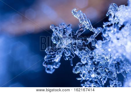 Image of a snowflake taken at 4 times life size.