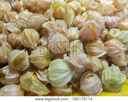 cape gooseberry fruit. Fresh cape gooseberry fruit Berries of a Cape gooseberry fresh fruit sour and sweet