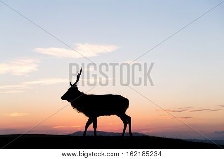 Fallow deer silhuette with a colorful sunset