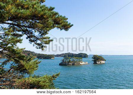 Pine tree of Matsushima