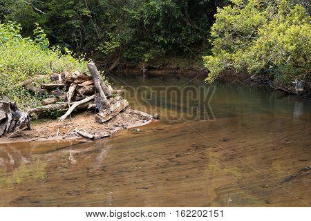 Beatiful landscape of protected area in Andasibe - Analamazaotra National Park Madagascar nature wilderness scene