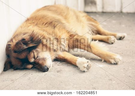 Homeless dog sleeping on the street