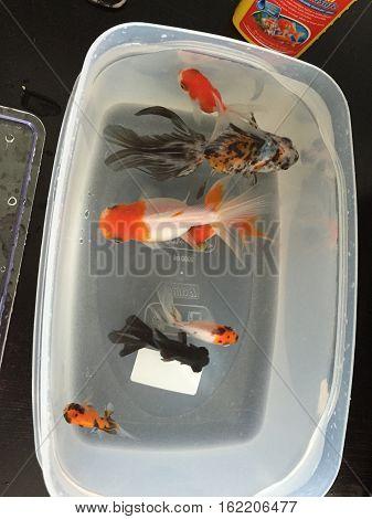 vaschetta di pesci di tutti i tipi
