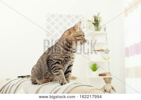 Grey tabby cat sitting on backrest