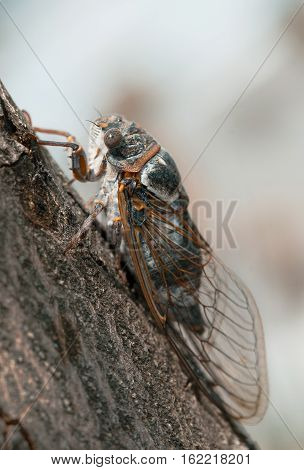 Close-up of cicada on the tree in Provence