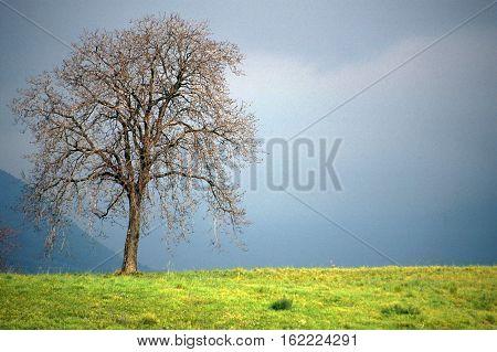 Winter Apple Tree On Gray Sky