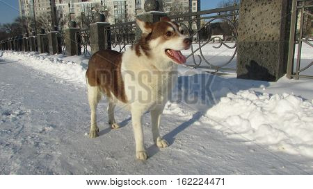 a vagrant dog hurries hungry for a street