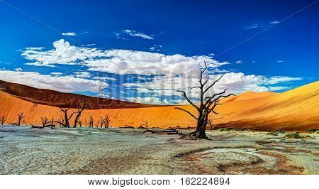 Deadvlei in Namib-Naukluft national park Sossusvlei Namibia