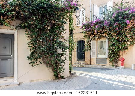 flower bushes on the wall in alley