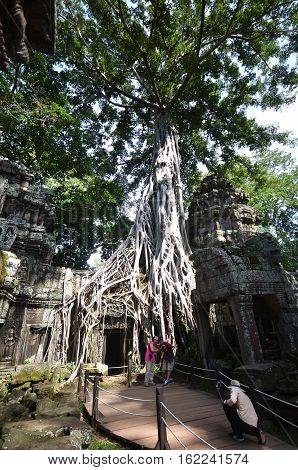SIEM REAP CAMBODIA - OCT 20 2016: Classical picture of Ta Prohm Temple Angkor Cambodia