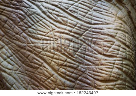 for wallpaper a zoom in reptile body animal textured like prehistoric life