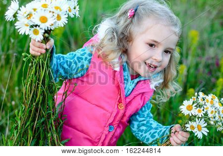 Child picking wild daisy flowers in field. Kids play in a meadow .Toddler girl outdoors in spring.