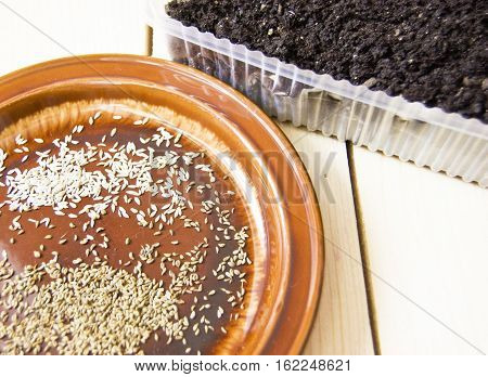 lettuce seeds parsley seeds on a plate put the seedlings
