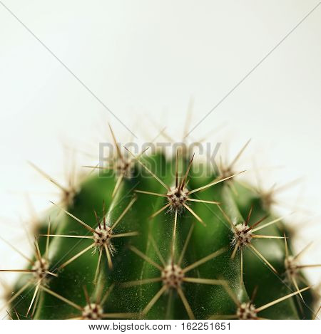 Close up of a green prickly cactus