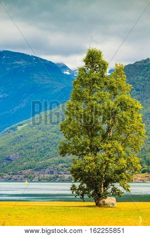 Mountains And Fjord On Sunny Day Norway