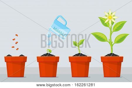 Plant growing stages. Timeline infographic of planting tree process. Green plant flower, graphic gardening seedling plant. Vector illustration