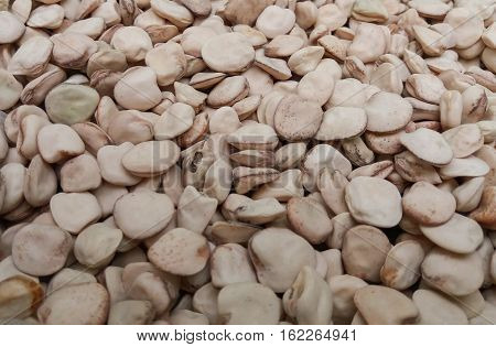 Grass pea (Lathyrus sativus) dried seed useful as a background