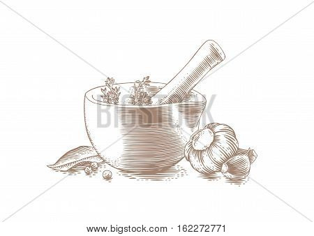 Drawing of mortar bowl with pestle spice herbs and garlic