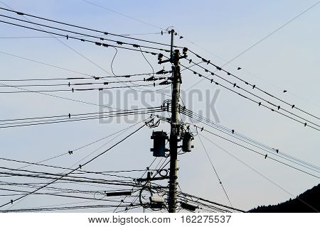 The coexistence of birds wires and electric poles.