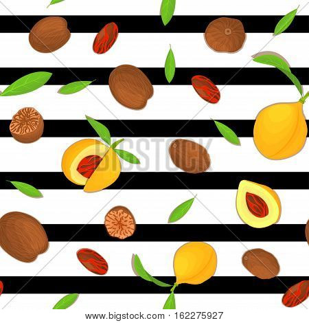 Vector seamless pattern Nutmeg spice fruit. Striped background with Nutmeg nuts fruit in the shell, whole, shelled, leaves appetizing looking for design of healthy food, printing on fabric, textile