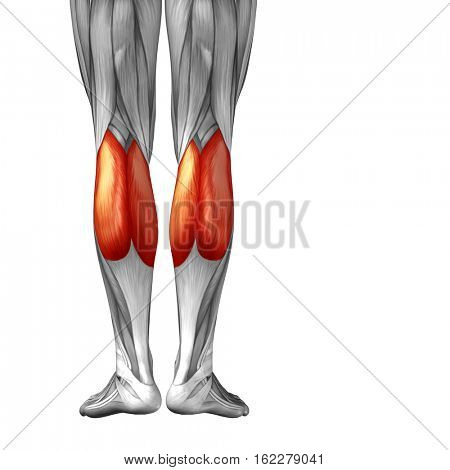 Concept or conceptual 3D illustration human lower leg anatomy or anatomical and muscle isolated on white background