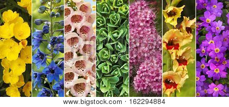 Colors of nature in the ornamental garden of colorful flowers closeup in the collage.