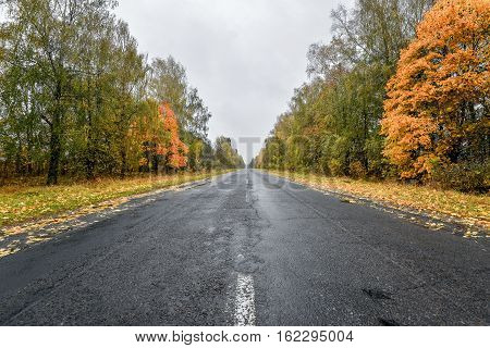 Empty asphalt road  through the autumn woods. Autumn scene with road in forest. Beautiful scenic empty road in the fall and woods. Asphalt road among the autumn forest and moody cloudy sky